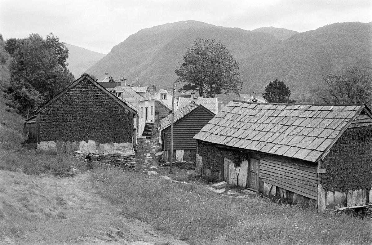 Klyngetunet på Havrå-gardene på Osterøya i Hordaland fylke.  Fotografiet er tatt fra et engareal mot bebyggelsen, der løene lå i ytterkant, mot innmarka.  Dette var såkalte grindabygde hus med saltak av digre, rektangulære skiferheller.  Her er det nok særlig veggene som har interessert fotografen.  Nederst mot bakken var de kledd med digre skifterheller som var stilt på høykant.  Disse beskyttet bakenforliggende konstruksjoner mot fuktoppslag fra takdrypp og slagregn.  Ellers var veggene dels kledd med horisontal bordkledning («vestlandspanel»), dels med flettverk.  I sistnevnte deler av løeveggene var kledningsmaterialet greiner av einer (Juniperus communis), på norsk også kalt brisk eller brake.  Arkitekten og antikvaren Halvor Vreim (1984-1966) har beskrevet denne bruken av einerkvist – brake – til veggkledning på en måte som også beskriver og forklarer dette fotografiet: «Utenpå stavene i løeveggene festes horisontalt lange reier, «tresteng» med ca. 20 cm avstand.  Så begynner fletningen av veggen.  Det gjøres ved å stikke briskekvistene nedenfra og oppover, slik at hver kvistlengde blir liggende utenpå to – og innenfor en stang.  Kledningen kom, ved at toppene hang nokså sidt, til å danne tre lag – hvorav to utenpå hver stang.  En reknet den ikke for å være god ellers.  Med øks og hammer blev fletningen efter hvert slått godt sammen.  Det var nemlig om å gjøre å få briskenålene til å sitte lengst mulig.  For å oppnå dette måtte kledningen pakkes godt.  Da blev den tett og sterk. …  Riktig utført varer kledningen i 50 til 60 år, altså dobbelt så lenge som almindelig umalt bordkledning gjør i Nordhordland.»  Kledningen skiftet imidlertid farge og karakter etter hvert som nålene tørket og falt av, samtidig som barken løsnet og falt av, mens det etablerte seg en vegetasjon av lavarter på treet.  Brakekledning ble brukt i områder der det var lite barskog, og dermed knapp tilgang på bygningsvirke, slik det var på deler av Vestlandet.  Denne typen kledning ble brukt 