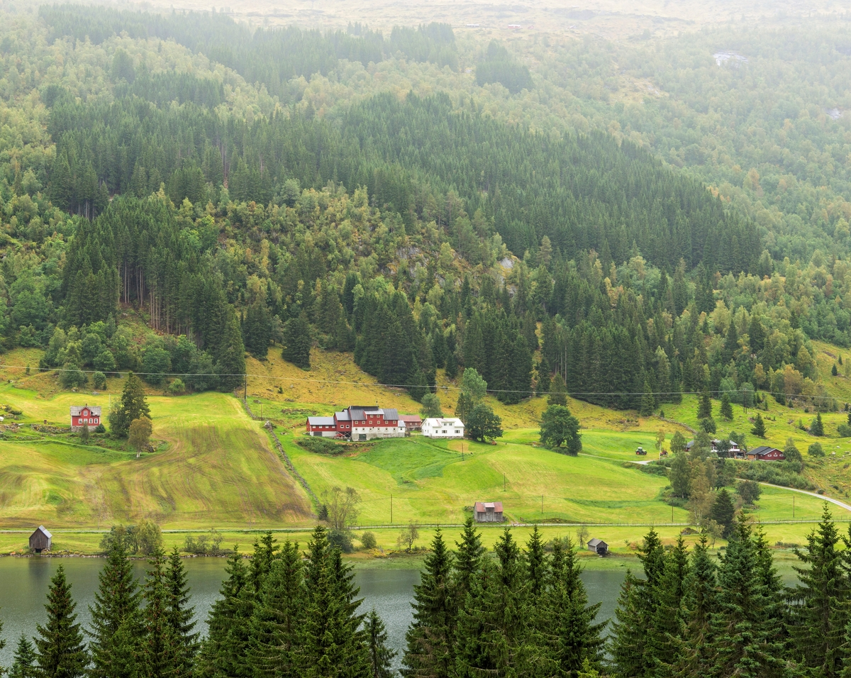 Kulturlandskap i Sogndalsdalen i Sogndal kommune i Sogn og Fjordane.  Fotografiet er tatt fra Sumnesområdet ved E5 på vestsida av Dalavatnet over mot Litlabø på østsida.  Fotografiet ble tatt høsten 2017.  Nederst i den østvendte lia i forgrunnen ser vi toppene på trærne i en plantet granskog.  På motsatt side av vatnet ser vi garden Litlabø med innmark nederst i lia og skog høyere oppe.  Det dreier seg dels om lauvskog, men vi ser også betydelige felt med plantet granskog, antakelig fra «skogreisingsperioden» i 1950- og 60-åra.