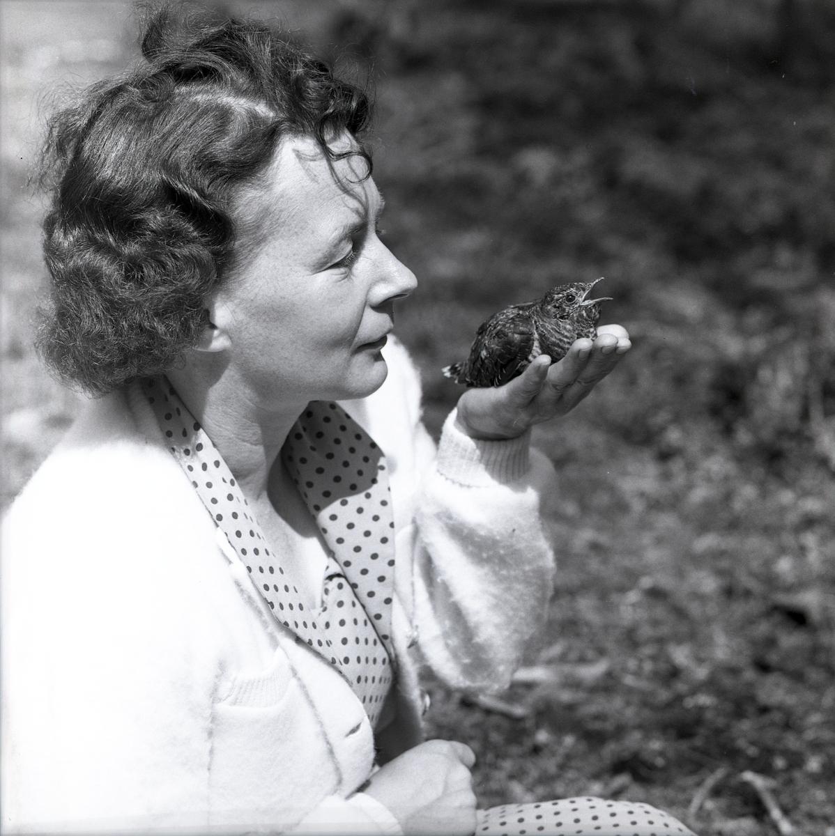 En gökungen blir matad av en fågelhona i handen på en kvinna den 13 juli 1961.