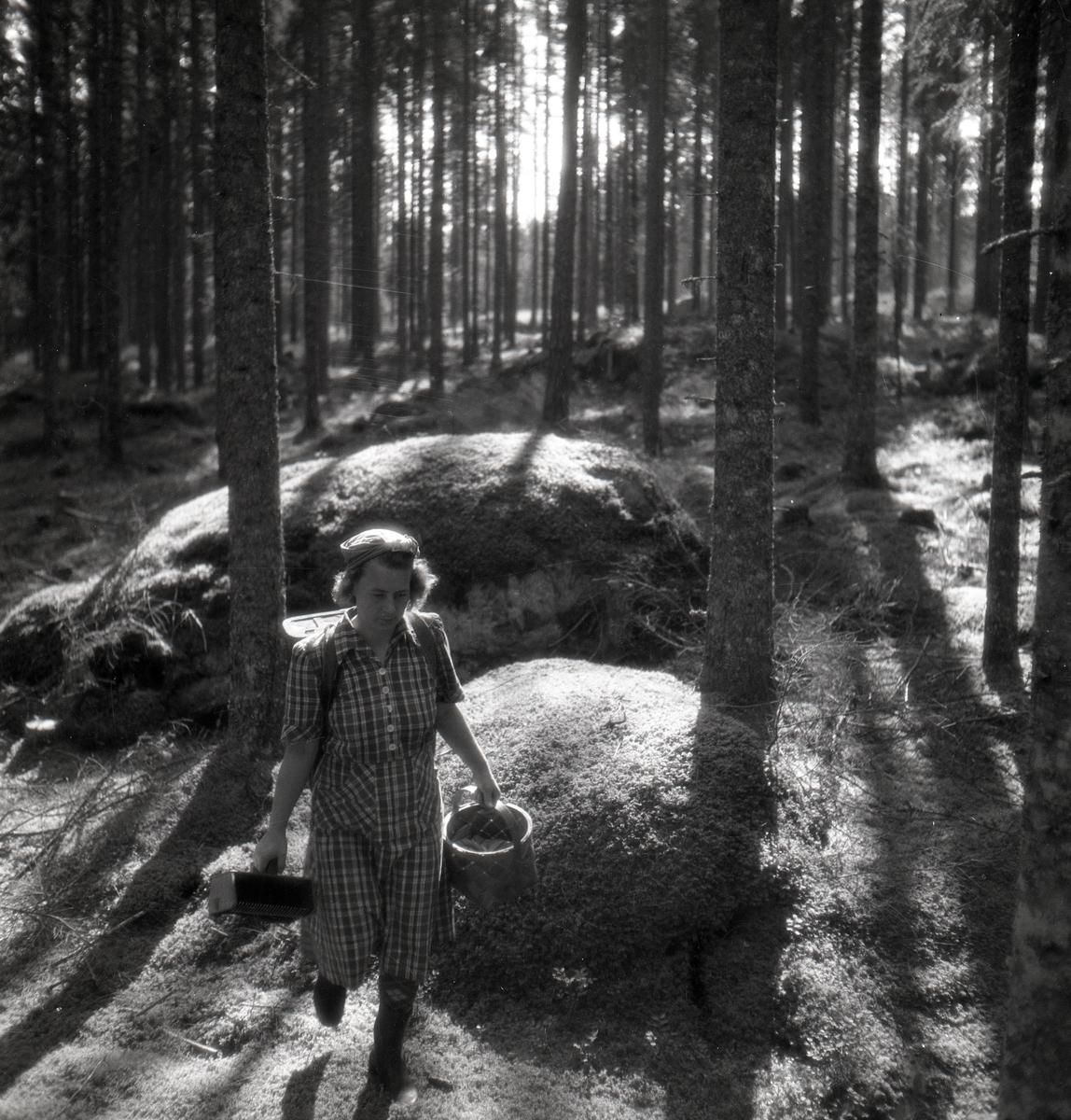 En kvinna vandrar i skogen med en bärplockare och korg i händerna samt en kont på ryggen. Solen lyser upp mellan trädstammarna på mossiga stenar.