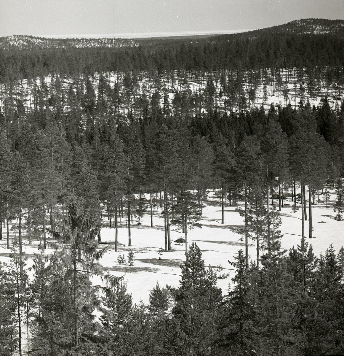 Utsikt över skog och berg, april 1951.