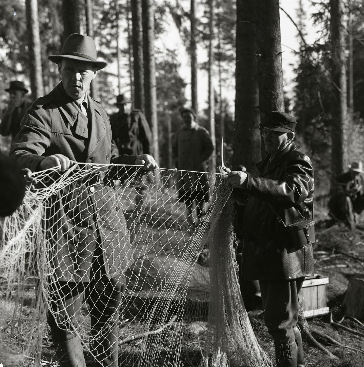 Två män håller upp ett nät vid harfångsten på Storön, 6 oktober 1957.