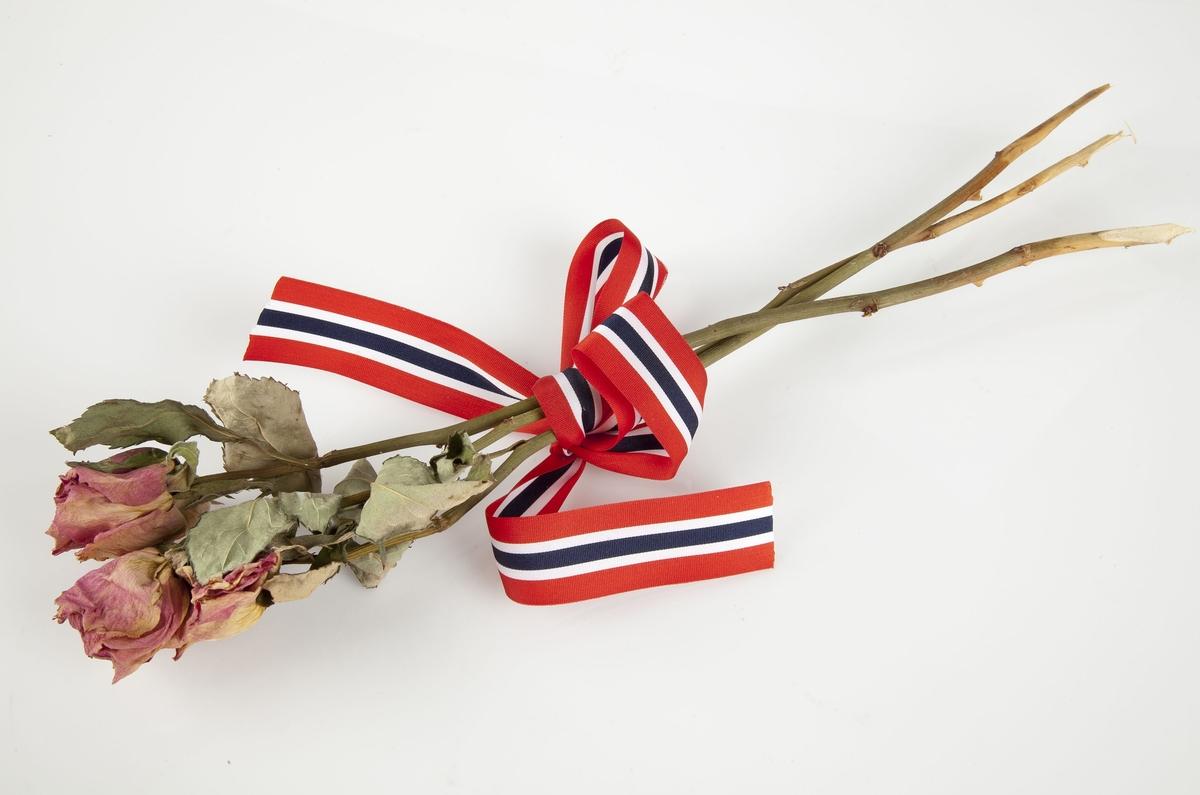 Rose innsamlet etter terrorhandlingen 22. juli 2011 fra minnesmarkeringene i Lillestrøm.   Tre rosa roser med bladgrener øverst som er bundet sammen av en sløyfe med de norske fargene. Sløyfen sitter over midt på rosestilkene som har få torner.