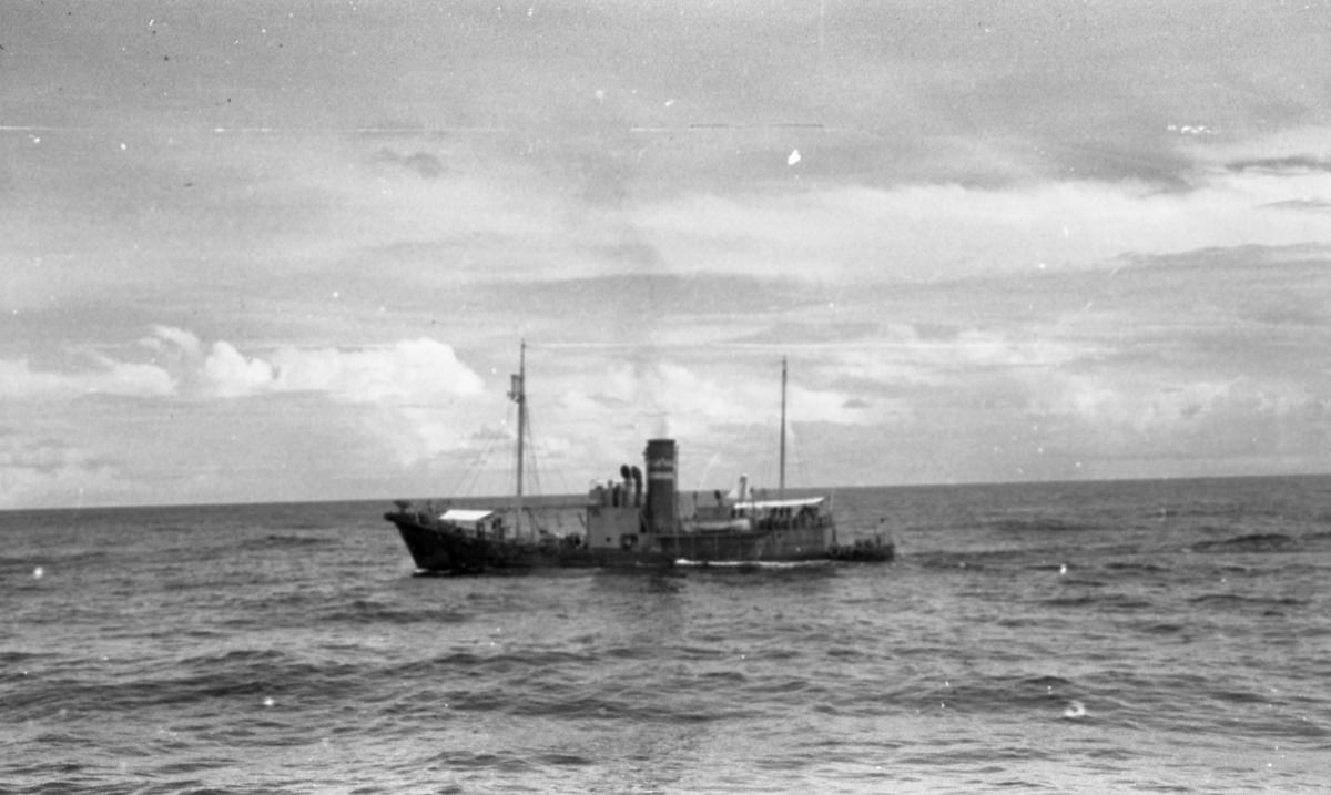 Hvalbåten Suderøy VIII. Suderøy på fangstfeltet.