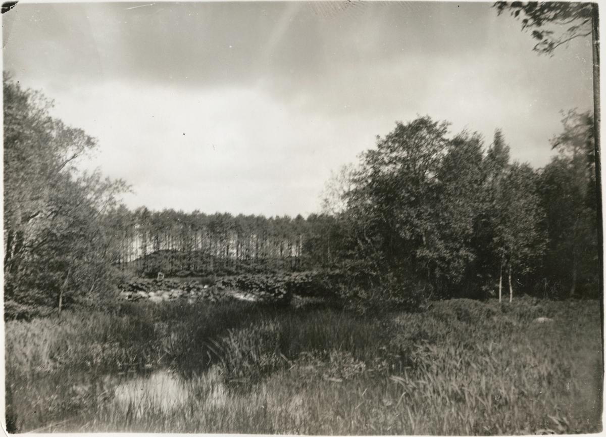 Vy på naturområde med del av Nybroån.