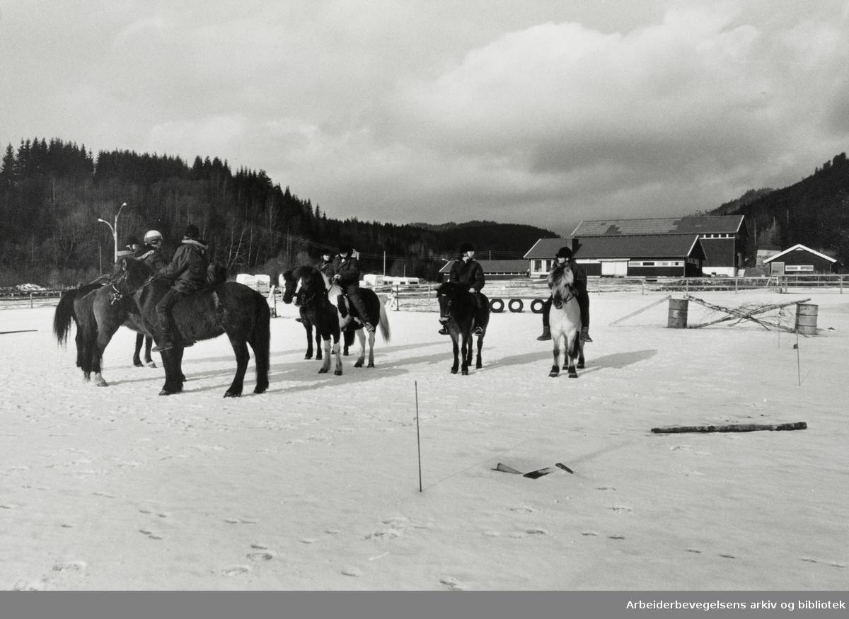 Elveli gård, hestesportsenter. Mars 1989