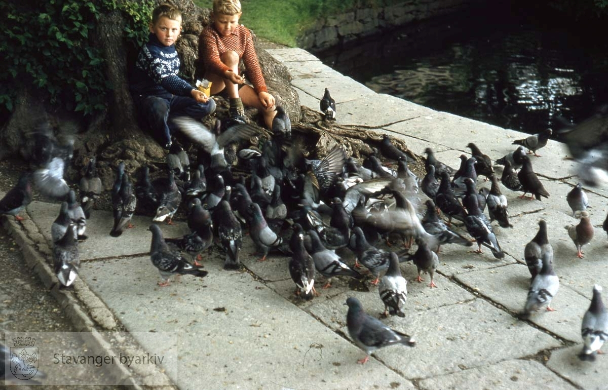 Fugler og mennesker i vanlig aktivitet ved Breiavatnet.
