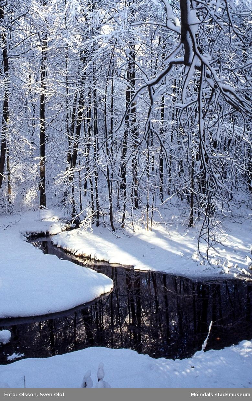 Svejserdalen i Lackarebäck, Mölndal, i december 2001. Kvarndammen i snö och rimfrost.