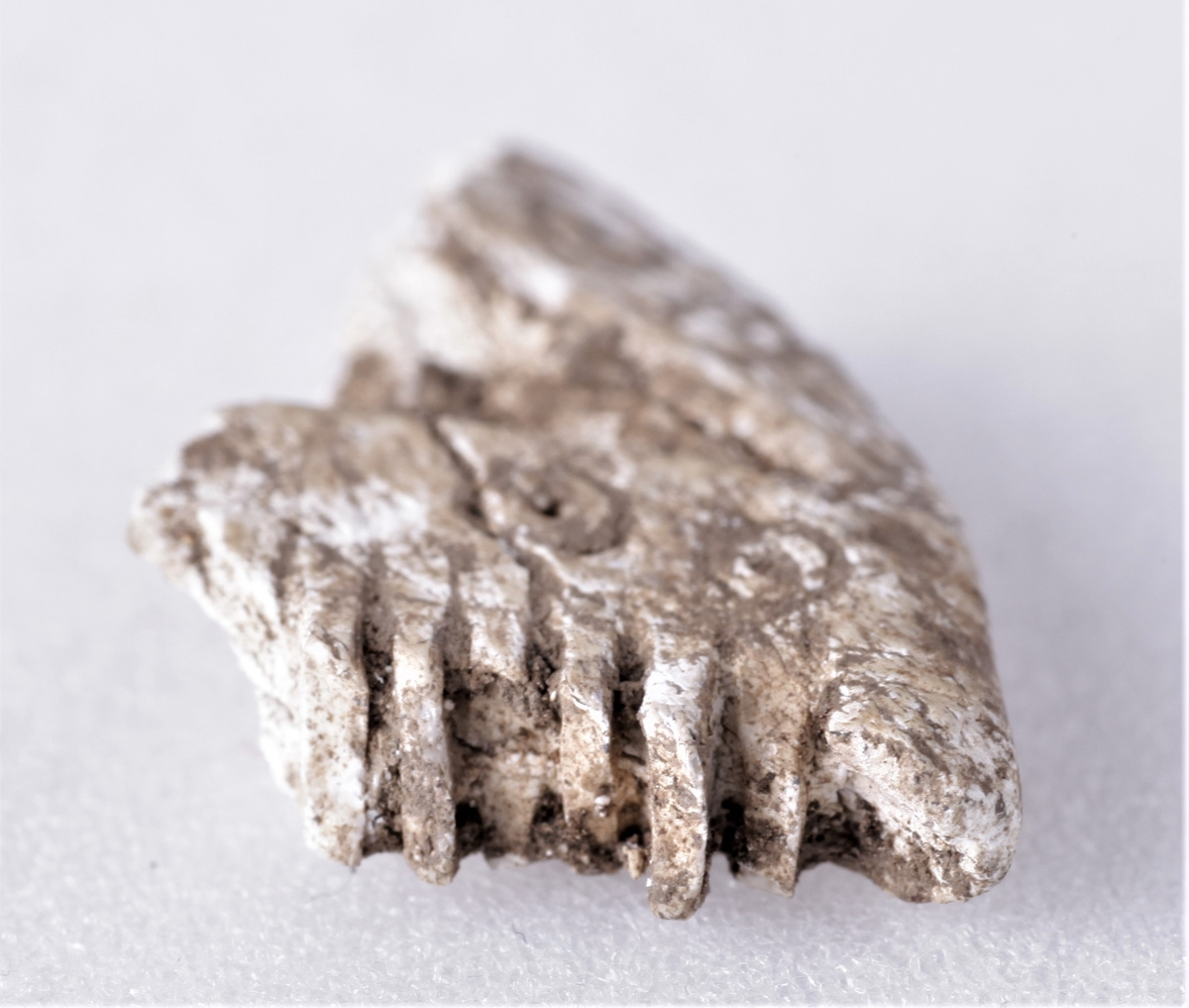 Del av reliefkam av bein med punktsirkelornament.