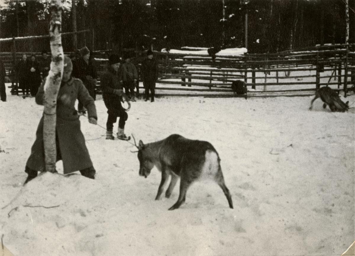 """Text i fotoalbum: """"Renskiljning vid Töre febr 1940. """""""