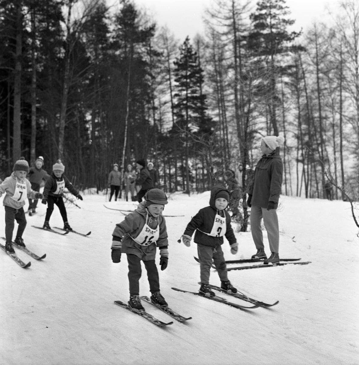 Barnskidskolans avslutning. Barn, försedda med nummerlappar, åker skidor nerför en backe. De har inga stavar. Några tittar på. En skog ses i bakgrunden.