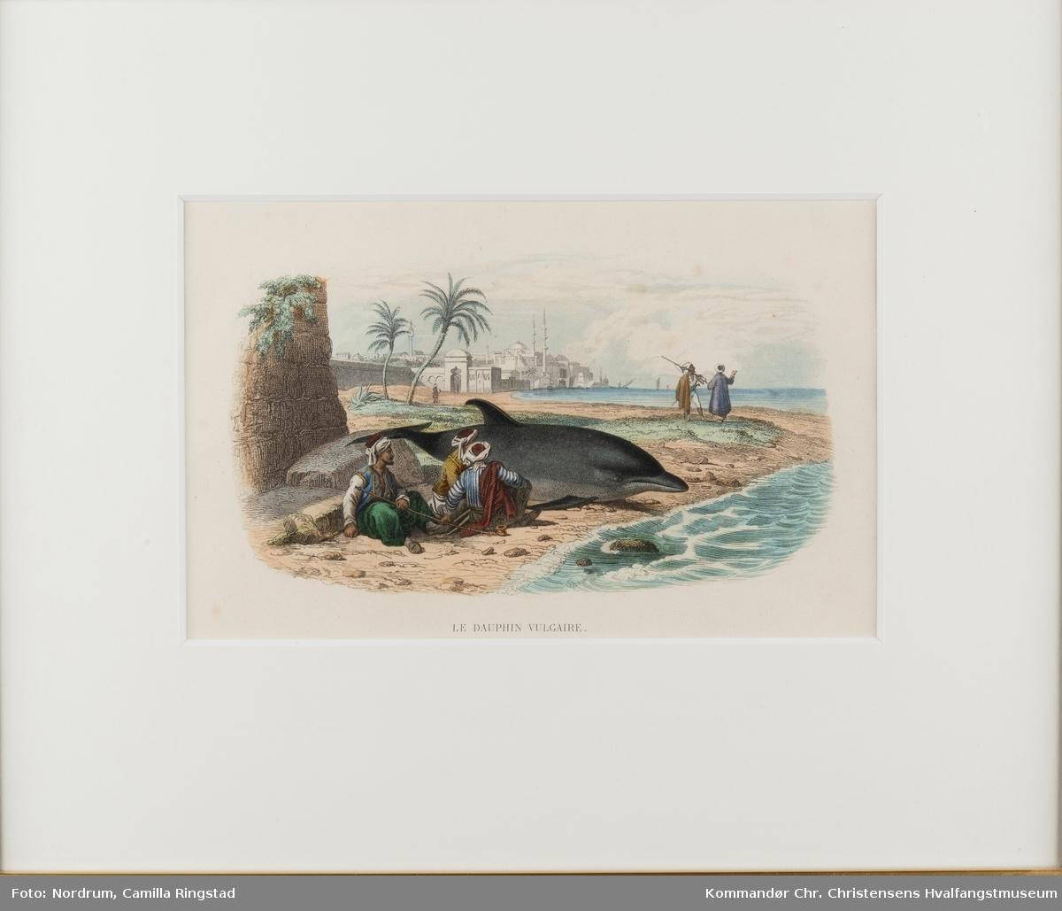 Strandet delfin