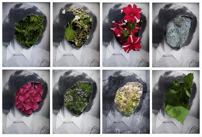 assne_med_blommor.jpg. Foto/Photo
