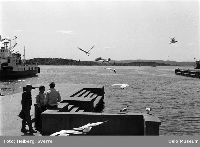 havn, honnørbrygge, gutter, måker, fjord, ferge, øyer