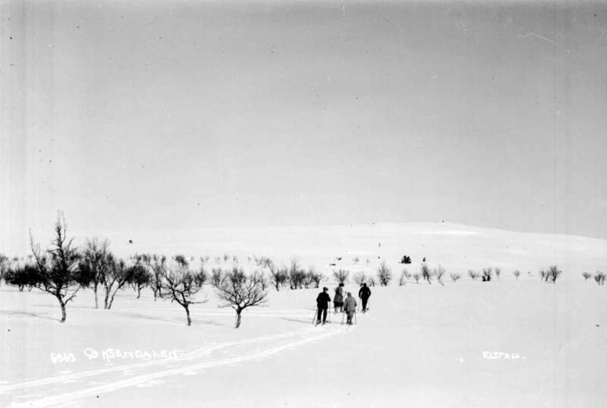 Øksendalen. Fire personer på ski mot Øksendalskampen. Bjørkeskog