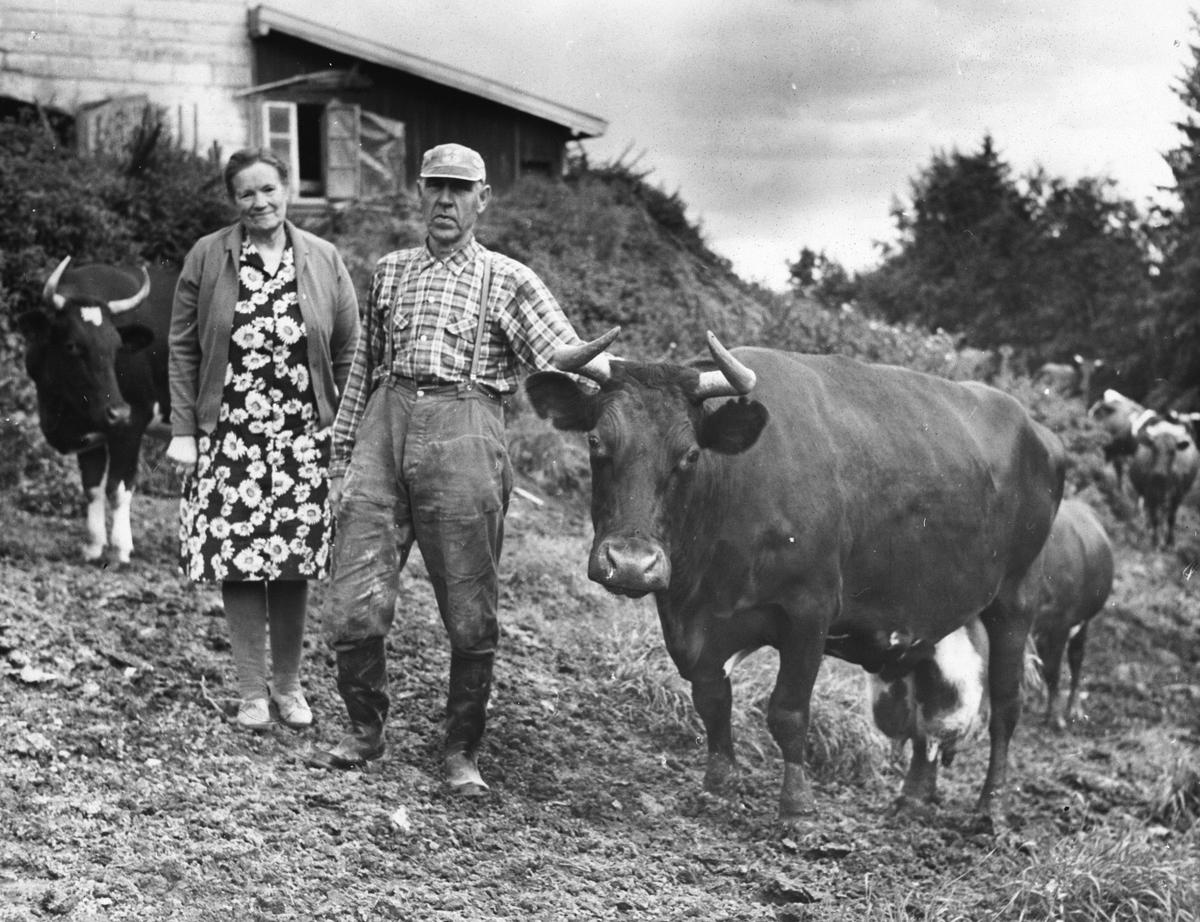 Ekteparet Thea og Ole Solbakken med Norges beste melkeku.