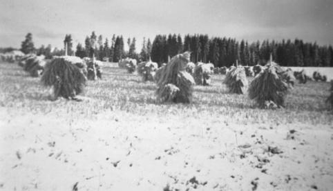 KORNSNES DEKKET M/SNØ, HØSTEN 1952, TØNSET, LØTEN