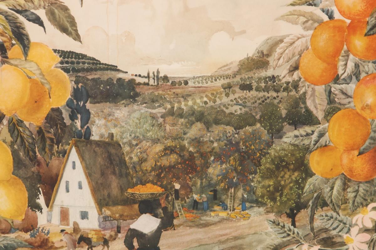 Appelsin- og sitrontrær