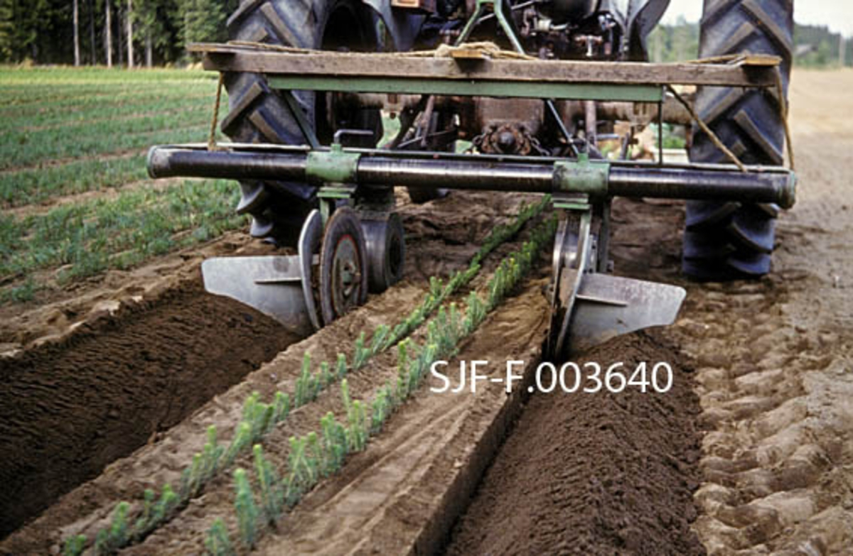"""Prikleplog som ble konstruert av planteskolebestyrer Ragnvald Fleten.  Redskapet er bygd opp på ei ramme som er montert på tvers bak en traktor.  På den nedre delen av denne ramma var det en bom hvor det var festet to plogenheter.  Begge disse enhetene besto av ei rund stålskive, som """"skar"""" et djupt, rettlinjet spor i plantemarka mens et utoverskrånende stålskjær veltet masse til side, slik at man kunne prikle mot de kantene de to plogenhetene hadde skapt.  Posisjonene til plogenhetene er stillbare ved hjelp av gjengeskruer på den nevnte bommen.  Først kjørte man opp spor til de to planteradene som skulle stå langs sentrum av plantesengene.  Etter at disse var priklet (som på dette fotografiet), flyttet man plogenhetene utover fra bommens sentrum og kjørte opp spor for de nevnte planteradene.  Dette fotografiet er tatt ved Stiklestad planteskole i Verdal i Nord-Trøndelag, der man anskaffet en slik prikleplog i 1971."""