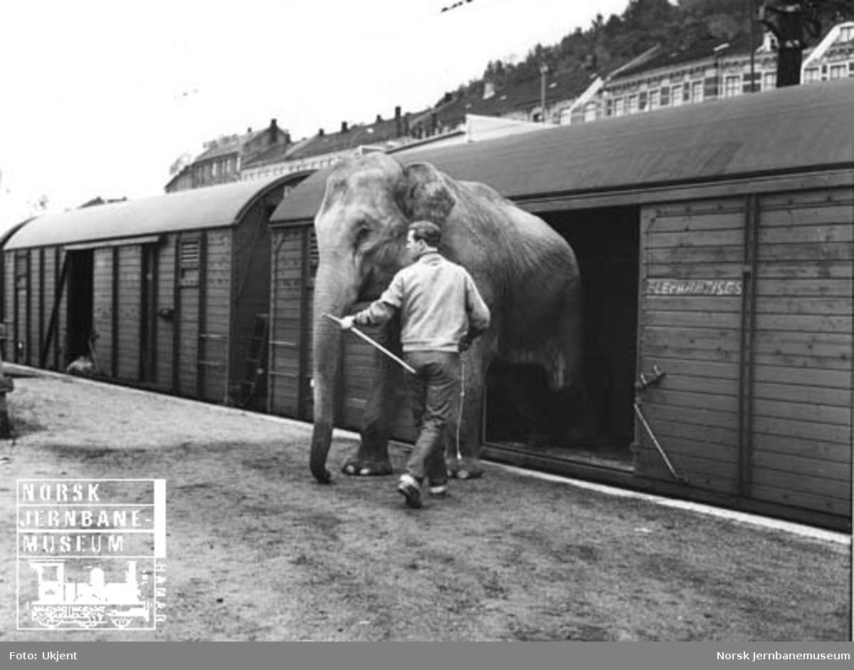 Sirkustog for Cirkus Scott på Loenga