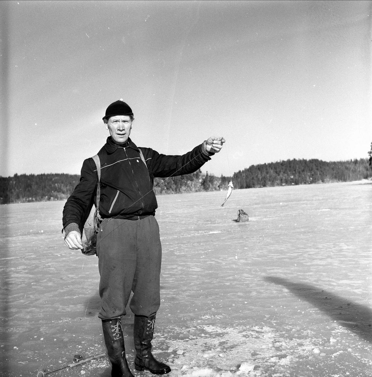 Isfiske, pilking på Gjersjøen, Oppegård, 11.03.1959