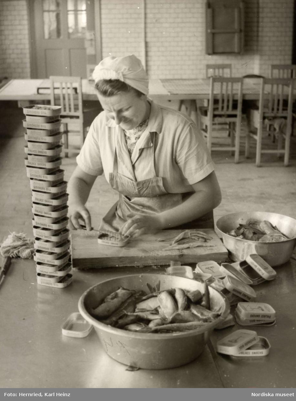 """Sveriges Förenade Konservfabriker, AB i Lysekil, Bohuslän. Bolaget  grundades 1898 och förfogar över åtta fabriker. I Lysekil har man specialiserat sig på enbart sill- och ansjovisinläggningar samt kryddning och sockersaltning av skarpsill och sill. Produkterna går under namnet """"Fyrtornet"""".En kvinna sitter och rensar, skär sill i gaffelbitar som hon lägger i burkar med texten """"Smörgås-sill"""" respektive """"Palace snacks""""."""