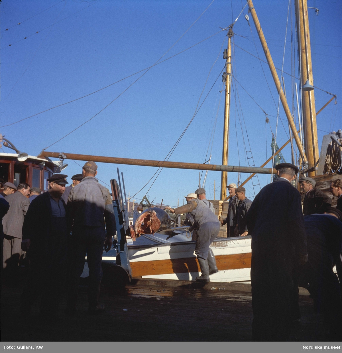 Göteborg. Fiskhamnen. Fisk lastas på truckgafflar.