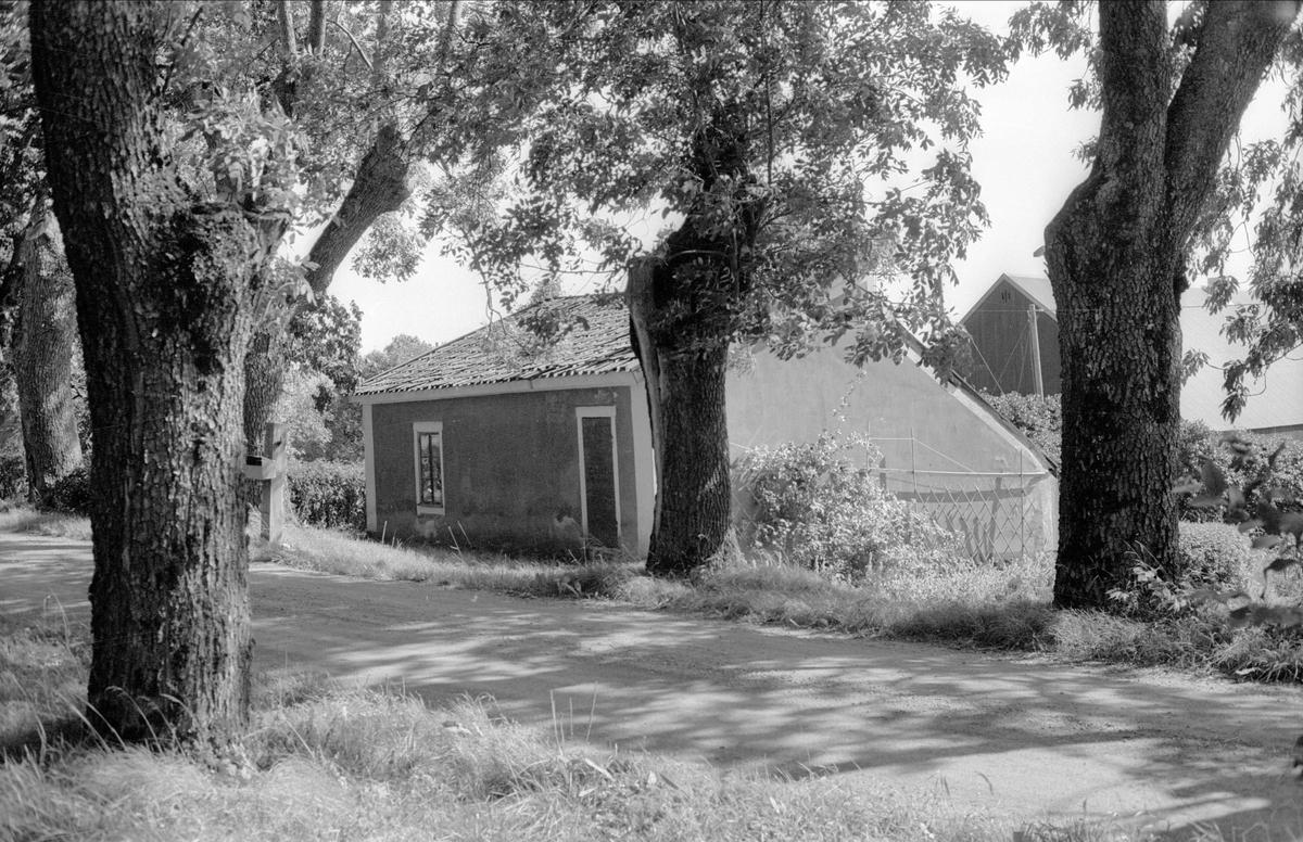 Drivhus, Halmbyboda 2:1, Halmbyboda, Funbo socken, Uppland 1982