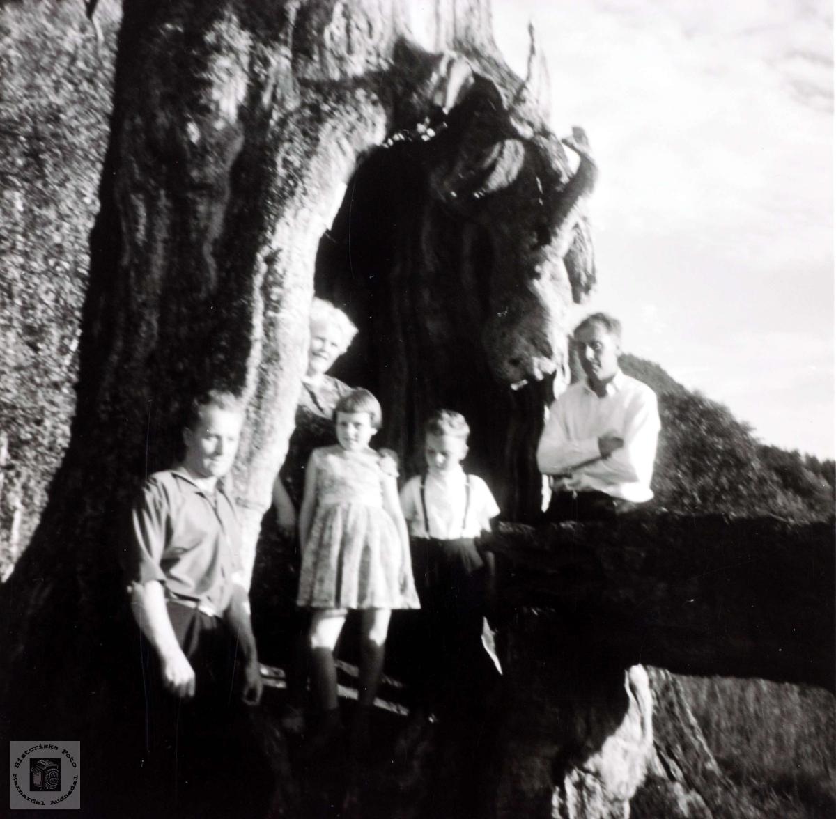 Personer fra Sveindal på tur til Grendi i Bygland, her i et gammelt tre.