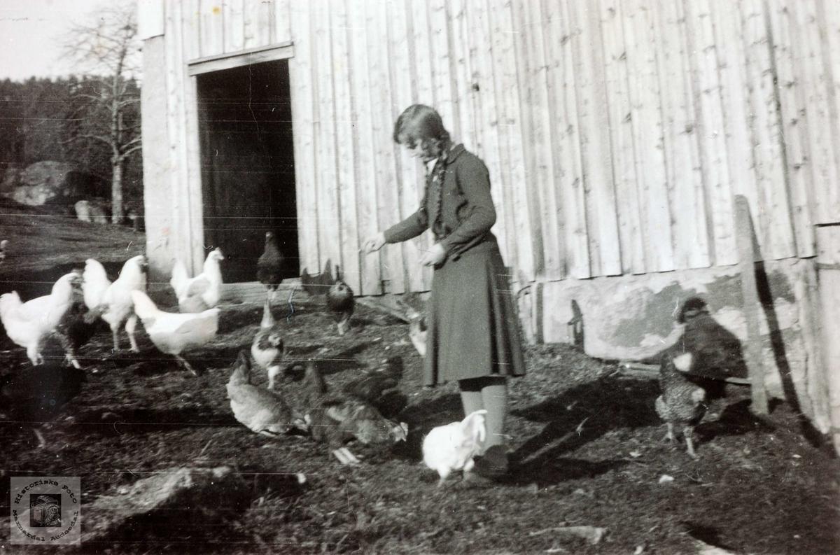 Mating av høns på Høyland i Grindheim Audnedal.