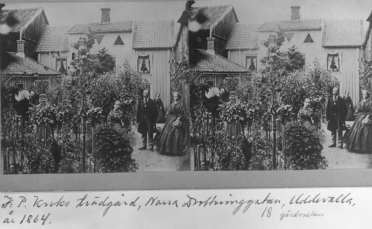 """""""Blomsterkroken"""", Johan Petter Kroks (1791 - 1868) trädgård, Uddevalla. Sterofoto."""