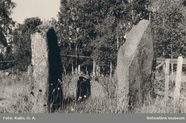 """Vykort. """"Grössby Ucklum Sn. Stenungsund."""" """"Rester av gravfält v. om stora landsvägen."""""""