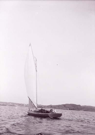 Segelbåten U.p.a  på Gullmaren 1908 med hunden Lisa