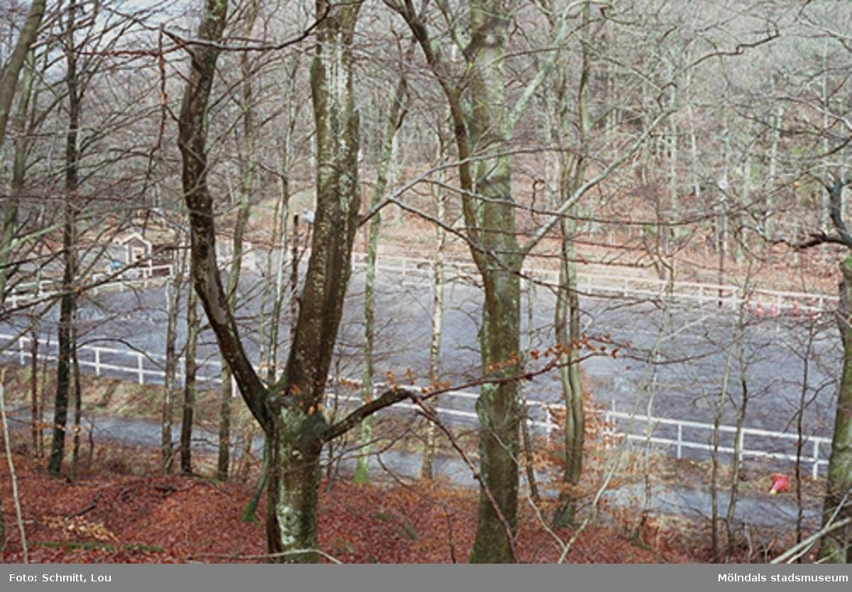 En paddock som tillhör ridstallet vid Gunnebo slott. Planen syns genom träden.
