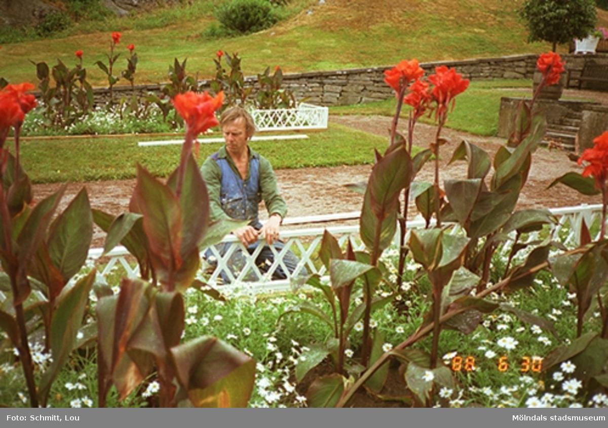 En man som blir fotograferad genom en blomsterrabatt i Gunnebo slottspark. Han har precis lagat ett vitt staket som står framför rabatten och håller nu i detta. I bakgrunden ser man fler rabatter samt en gräsbeväxt kulle.