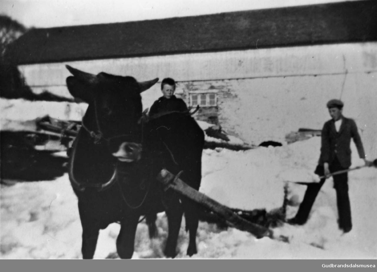 Snøkjøring med okse og slede,, to gutter måker snø opp i sleden, stor bygning i bakgrunnen.