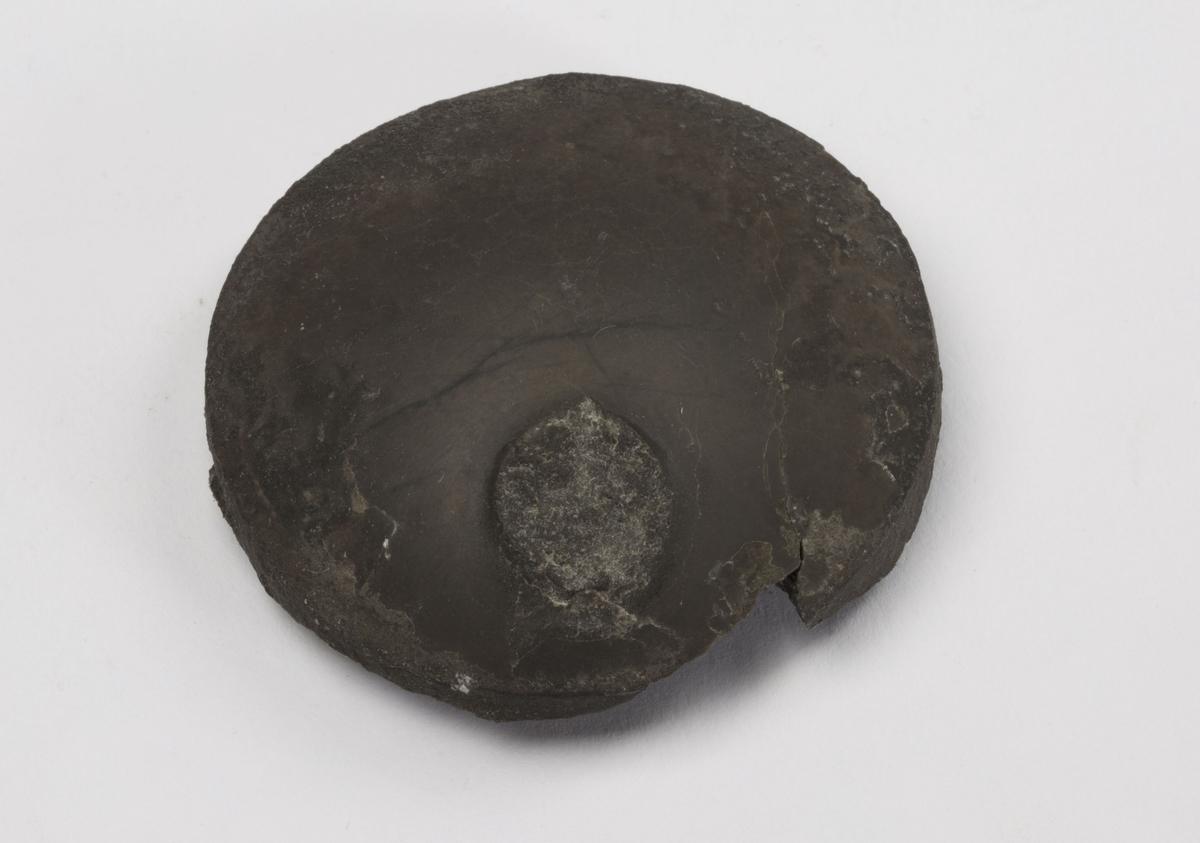Fossil DEL AV KAMMER TIL BLEKKSPRUT