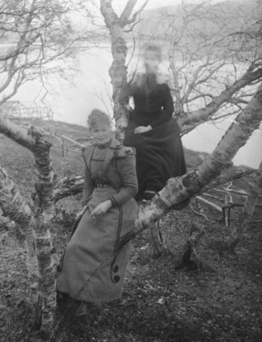 To kvinner fotografert oppe i et bjørketre på Langnes i Tana
