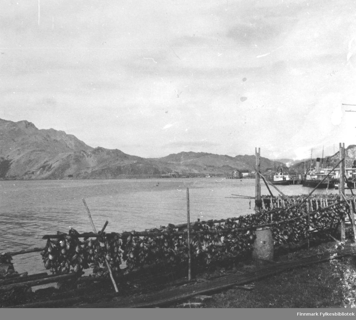 Landskapsbilde fotografert fra Honningsvåg. Foran på bildet fiskehjeller med fiskhoder på. Noen bebyggelser og kai bakerst i bildet. Bildet er et stereobilde.    .