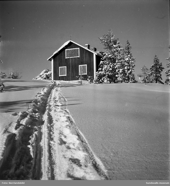 Vinterbilder från skidspåren runt Sundsvall, Norra berget och Sidsjöområdet.