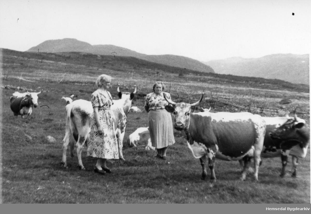 Med bjøllekyra på Bjørnebergstølen i Hemsedal. Frå venstre: Margit, gift Tomassen og Gunvor (Bjørnebergstølen) Tuv