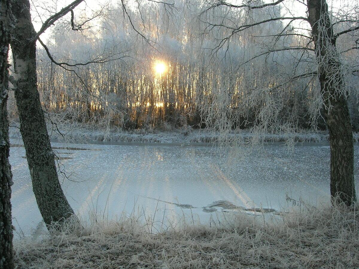 Vinter i Øyeren-deltaet.