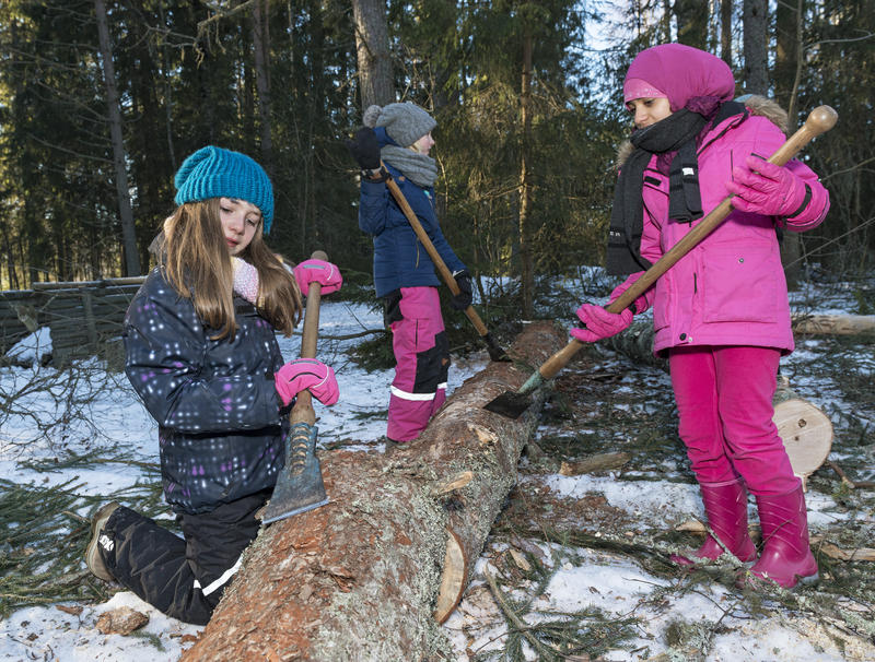 Skoleelever barker tømmer under temadagen fra stubben til tømmervelta 15/2 2016