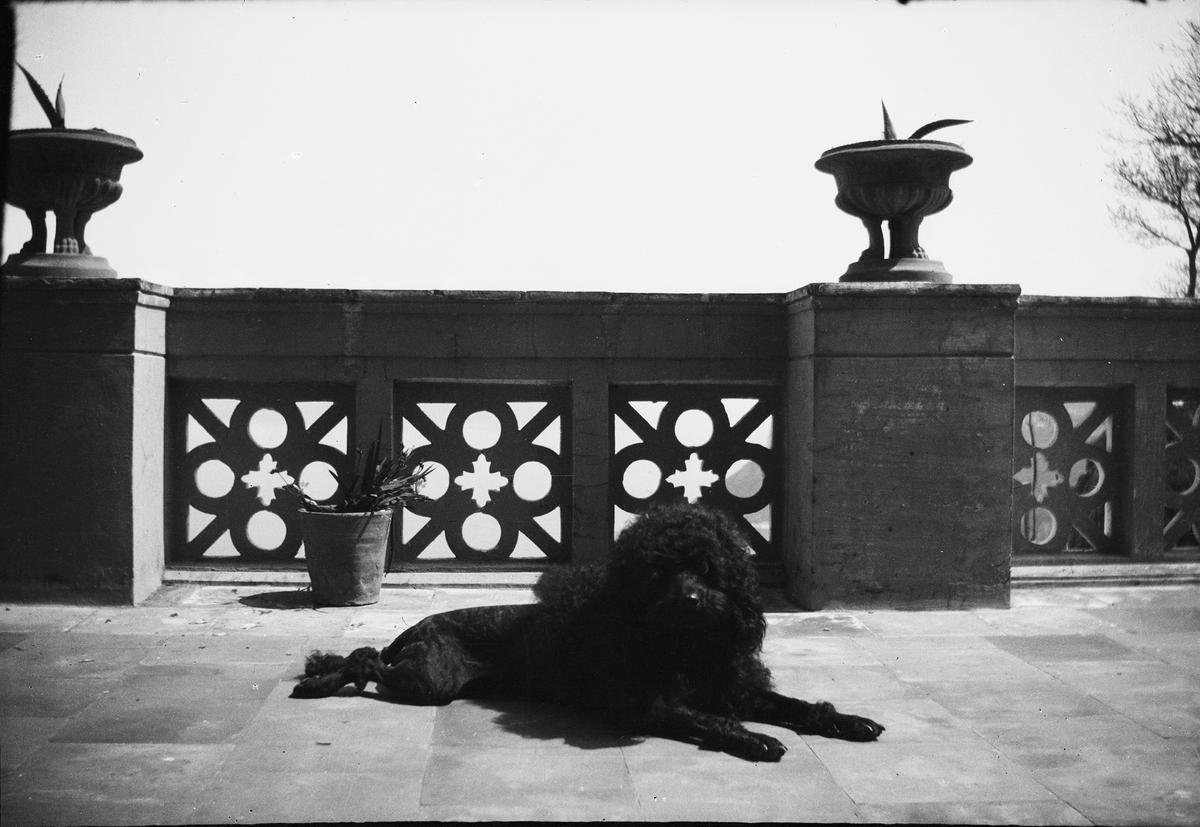 Drottning Victorias bilder. Pudel på altan. Möjligen Villa San Michele, Capri.