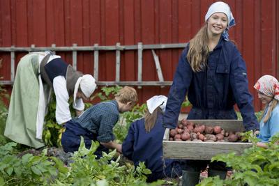en gruppe ungdom tar opp poteter i Friluftsmuseet. Foto/Photo