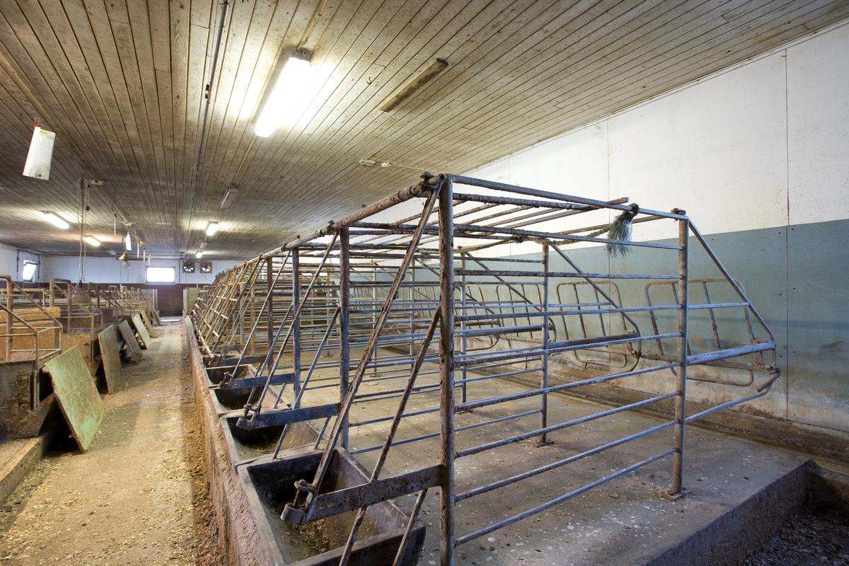 Grisebinge. Brukt til å fiksere griser i griseproduksjonen. I dag er grisebinger av denne typen forbudt iht. dyrevernlovgivningen.
