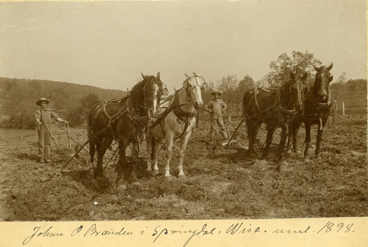 Pløying med tospann i Springdale, Wisconsin i 1898. Den ene mannen er Johan O. Brænden, utvandret fra Norge.