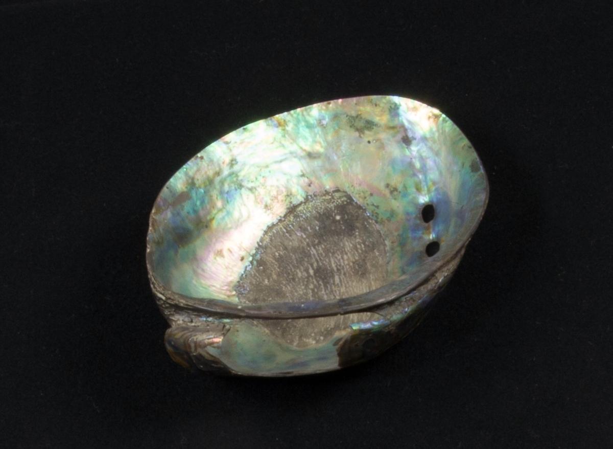 En mussla, halva, använd som cigarrkopp. Pärlemorlager på både ut- och insida.