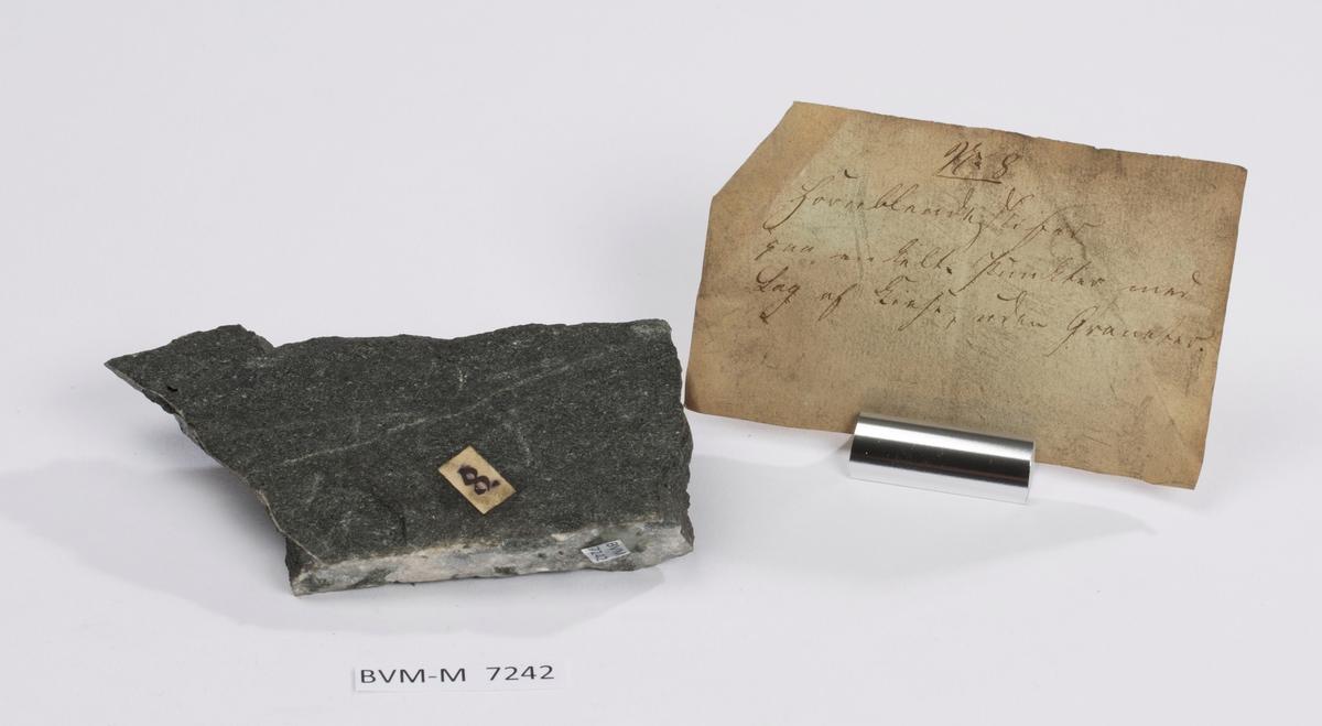 Etikett på prøve:  8.  Etikett i eske: No. 8 Hornblendeskifer paa enkelte Punkter med Lag af Kiese, uden Granater.