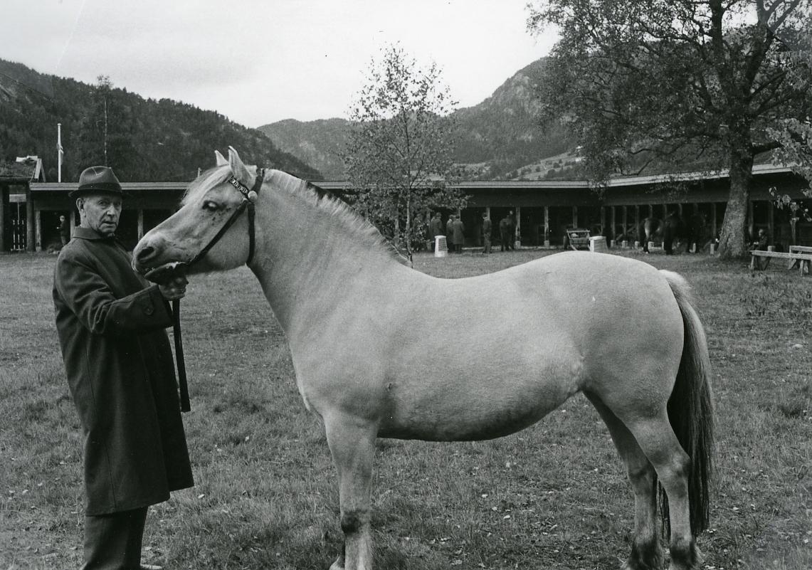 Mønstring av hesten Rydhild.
